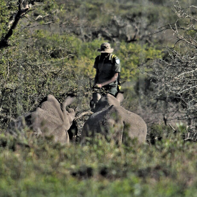 Thula Thula anti poaching unit