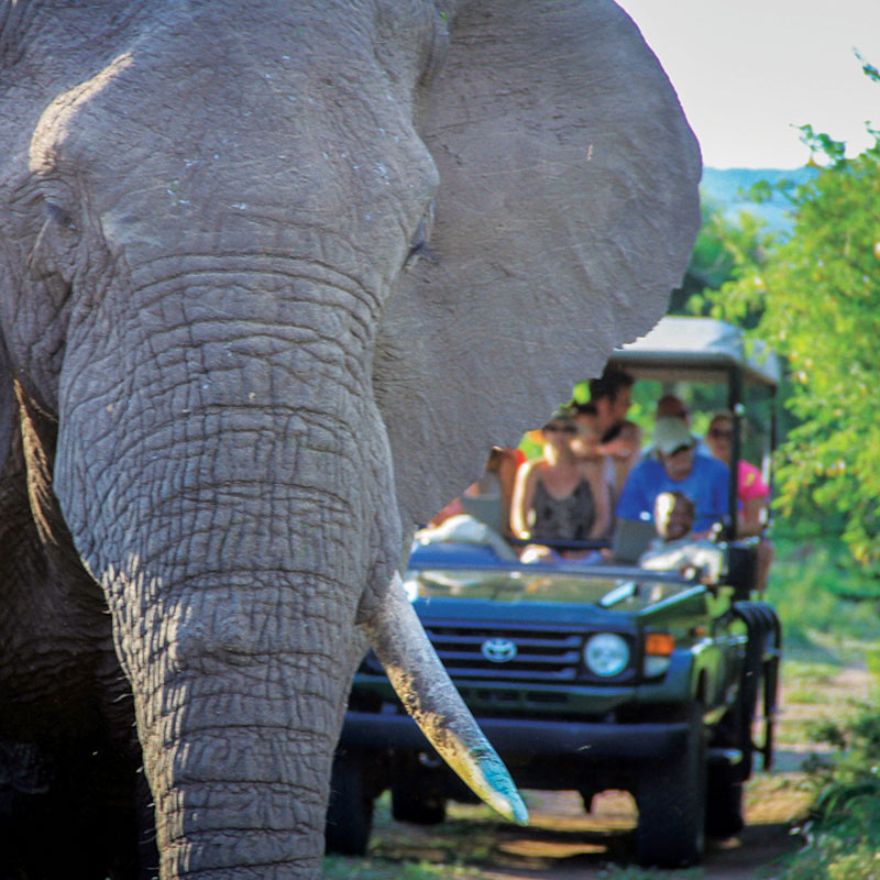 elephant day drive